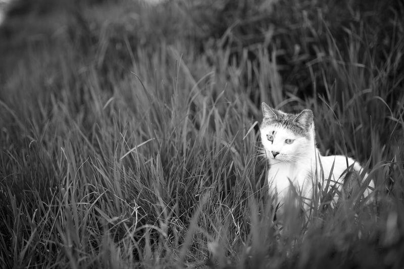 Portrait of cat in grass