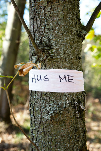 Trunk Tree Tree Trunk Focus On Foreground Plant Day Communication Text Nature Forest Land Sign Outdoors Western Script Close-up Growth No People Plant Bark Bark Message Hugging A Tree Hug Me Hug Invitation Positive Emotion Positive Friendship Relationship Sustainability Nature Conservancy Ribbon