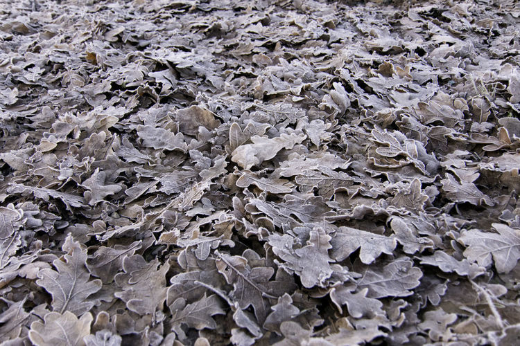 Full frame shot of dried leaves on ground