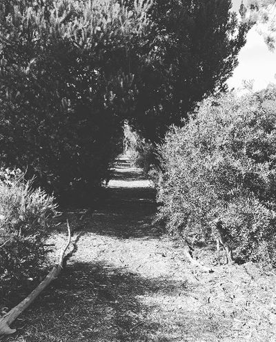 Barossa Valley South Australia Tree Growth Nature The Way Forward Plant Outdoors Day Tranquility Beauty In Nature Travel Photography Travel Nature EyeEmNewHere Rachelcharlesworth_photography Blackandwhite