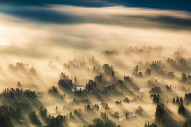 Aerial view of trees on landscape during foggy weather