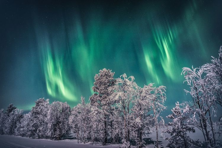 Green dream landscape Beauty In Nature Tree Sky Scenics - Nature Nature No People Night Tranquility Winter Green Color Snow Tranquil Scene Idyllic Star - Space Outdoors Astronomy Power In Nature Travel Aurora Borealis Northern Lights Lapland, Finland Landscape Nature_collection Scenics Freshness