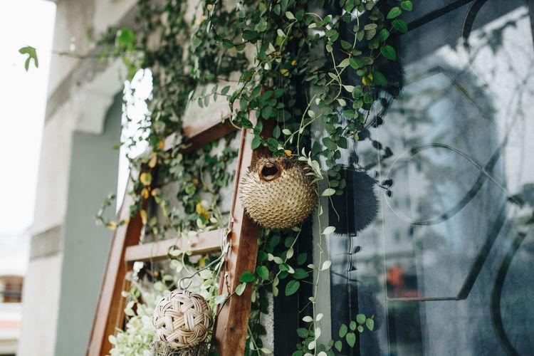 Close-up of plant decoration outside house balcony