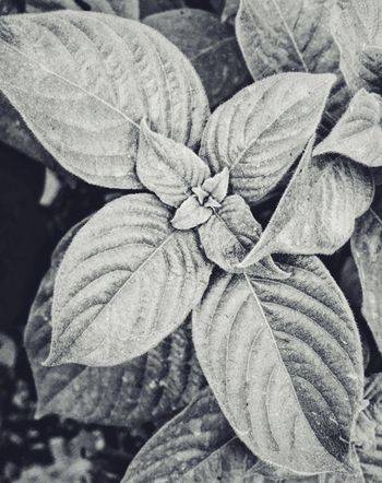 Leaf Nature Beauty In Nature No People