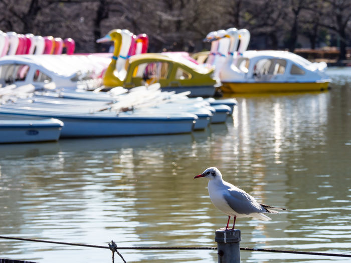 Seagull perching on a boat