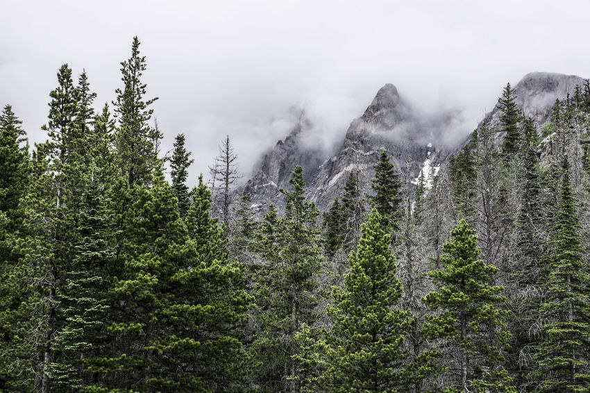 Beauty In Nature Colorado Photography Landscape Majestic Mountain Mountain Range Nature Outdoors Overcast Rockies Rocky Mountain National Park Rocky Mountains Scenics Sky Tranquil Scene Tranquility Tree Weather The Great Outdoors - 2017 EyeEm Awards