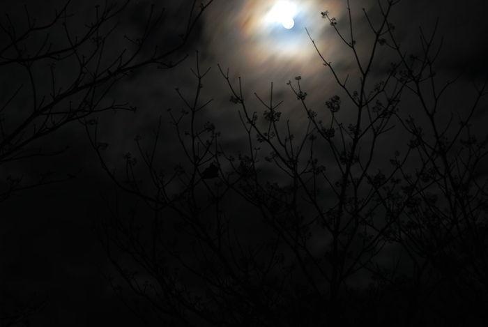Dead Tree Learn & Shoot: After Dark Moon Moonlight Night Night Shots  Silhouette Sky Trees