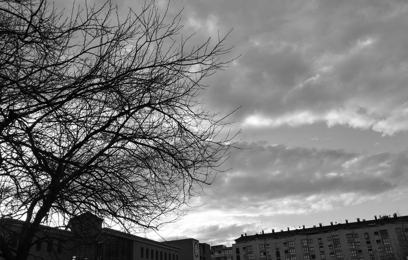 Sky Cloud - Sky Tree No People Low Angle View Silhouette Outdoors Nature Bird Storm Cloud Beauty In Nature Day EyeEmNewHere Dark And Dismal Beauty Nature On Black And White Black And White Nature Photographs