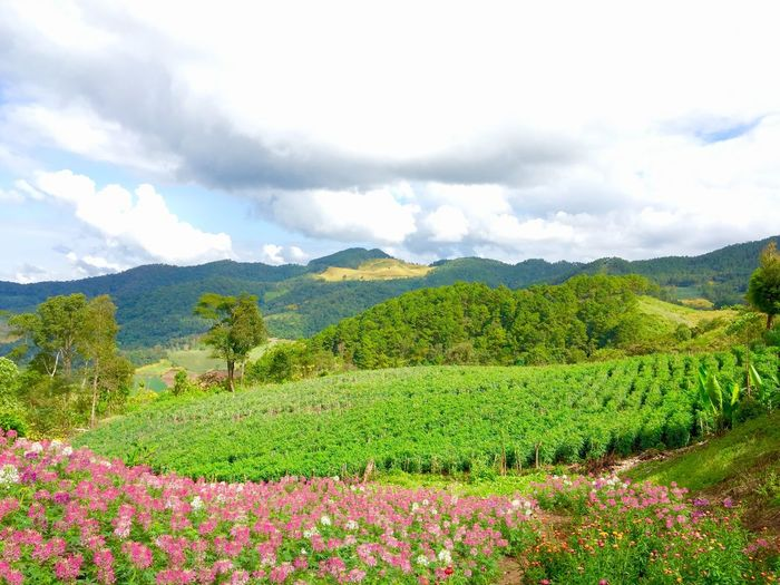 Agriculture Beauty In Nature Cloud - Sky Day Field Flower Freshness Green Color Growth Landscape Mountain Mountain Range Nature No People Outdoors Plant Rural Scene Scenics Sky Tranquil Scene Tranquility Tree