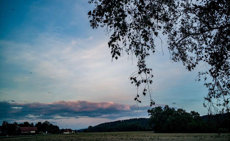 Everyday the same sunset Nature Graphxart Upperaustria Austria Huawei Power Of Nature Sundown Sunset Mate9 Home Sun Clouds Field Tree Tree Water Mountain Sky Landscape Cloud - Sky