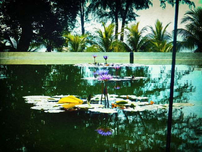 Flowers Nature Pond