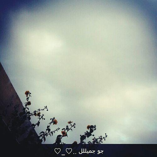 Taking Photos تصويري من الارشيف