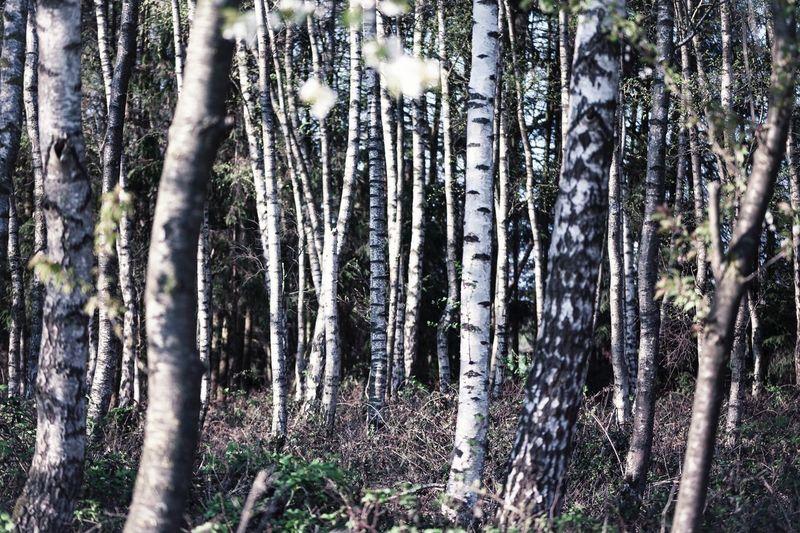 ©️882 birch.