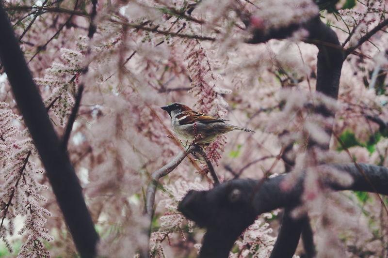 The Great Outdoors - 2016 EyeEm Awards Photography Spring Nature Bird Birds Paris Love Pink