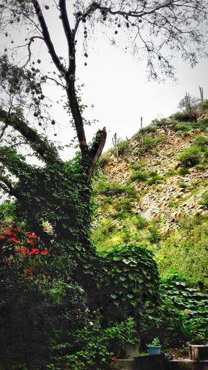 green hill Hill