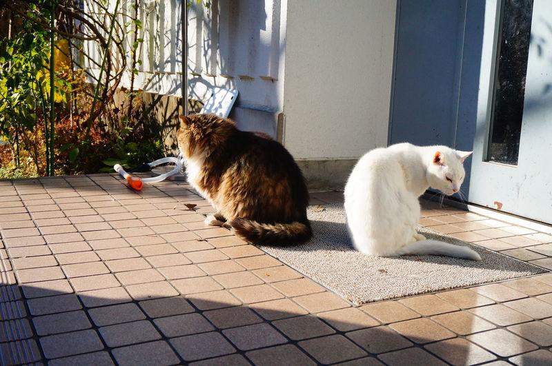 View of cats on doormat