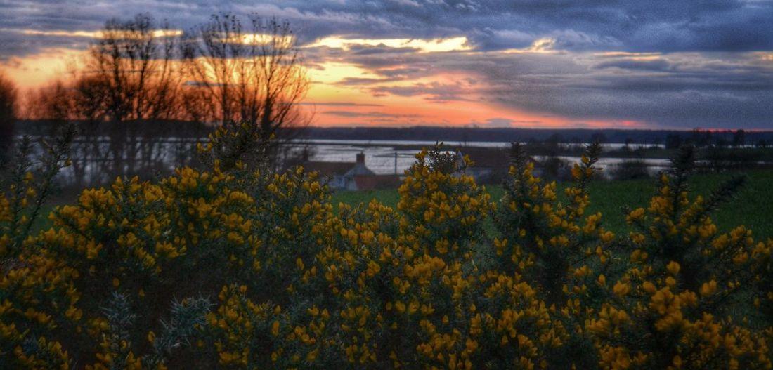 Sunset over the River Alde, Aldeburgh, Suffolk. Aldeburgh Sunset #sun #clouds #skylovers #sky #nature #beautifulinnature #naturalbeauty #photography #landscape Suffolk RiverAlde Riverside Januaryphotochallenge Sunrise_sunsets_aroundworld Suffolk, United Kingdom Clouds And Sky
