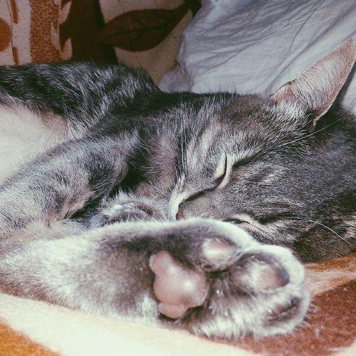 Cat Cat Lovers Cats Of EyeEm Catsoftheworld Catslife Catsoneyeem Catslover Photography Picture Sleeping Cat Sleeping First Eyeem Photo