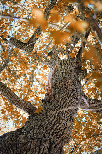 Tree Plant Trunk Tree Trunk Branch Nature Low Angle View No People Day Autumn Orange Color Growth Leaf Fall Wildlife Wild Forest Outdoors
