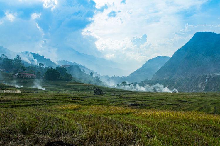 Rice fields on