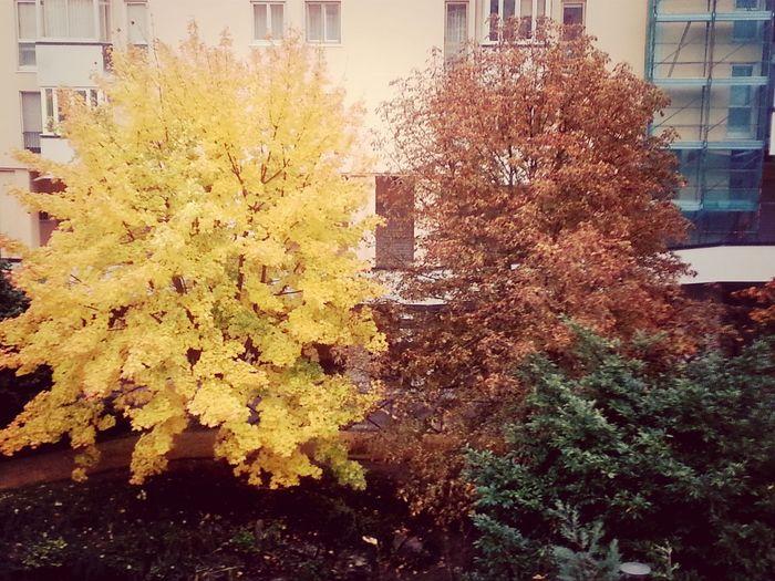 Tricromia autunnale. Nature Autumn Colors Tricromia Tricolor