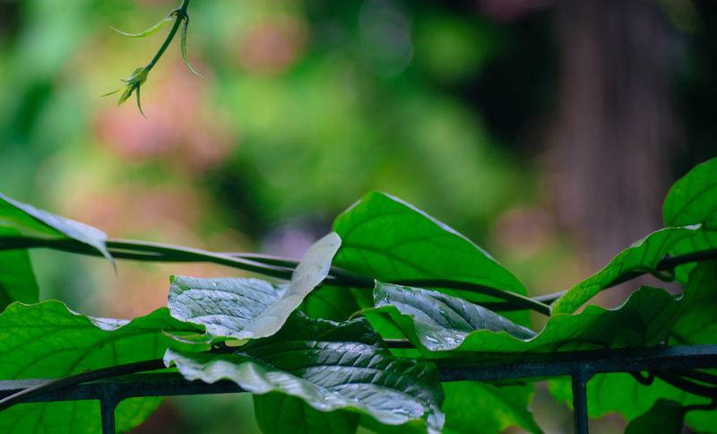 leaves Leaf Close-up Plant Green Color Dew Arthropod