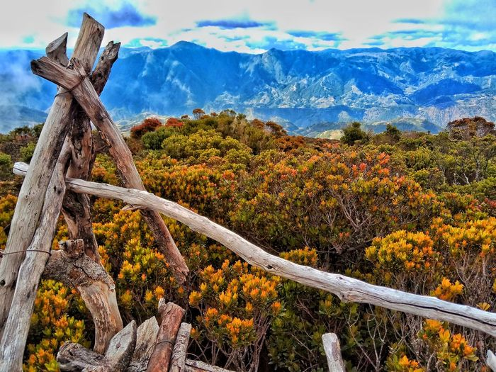 Summit platform of Mt. Tabayoc Nature Mountain Tree Day Sky Outdoors No People Scenics Cloud - Sky Beauty In Nature Tranquility Landscape Plant Growth Mountain Range Close-up