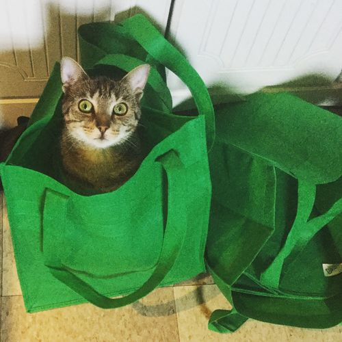 Cat In A Bag Thinks She's Hiding Silly Kitty
