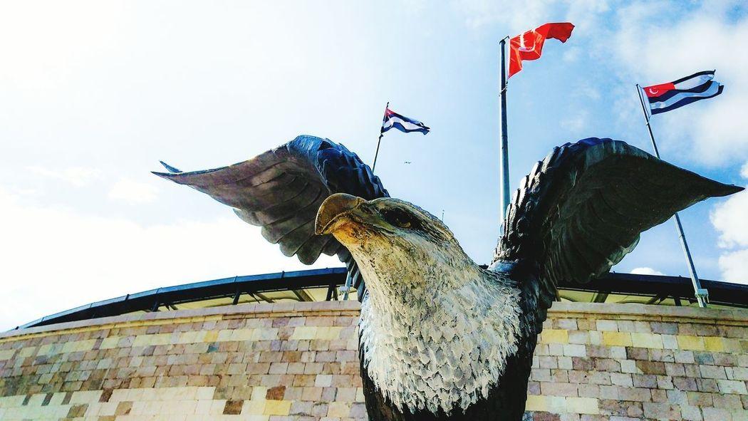 Besiktas Animal Themes No People Football Turkey Low Angle View Animal Wildlife Day Outdoors Statue Istanbul Soccer Eagle Blackeagle