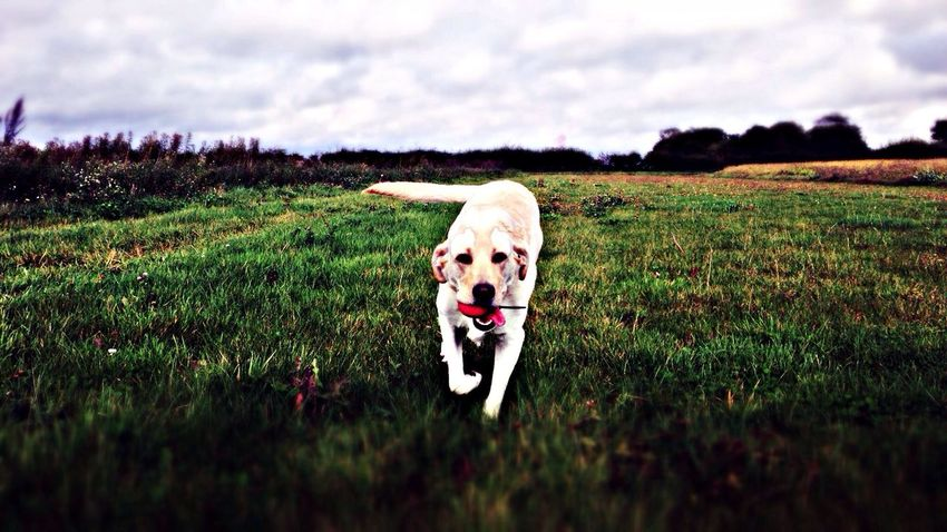 here is dodo the dog in a field...