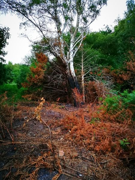 While we were exploring we found this area which had recently been set on fire. Tree Nature Day Outdoors No People Growth Forest Water Beauty In Nature Sky Burnt Wood Burnt Trees Burnt Orange