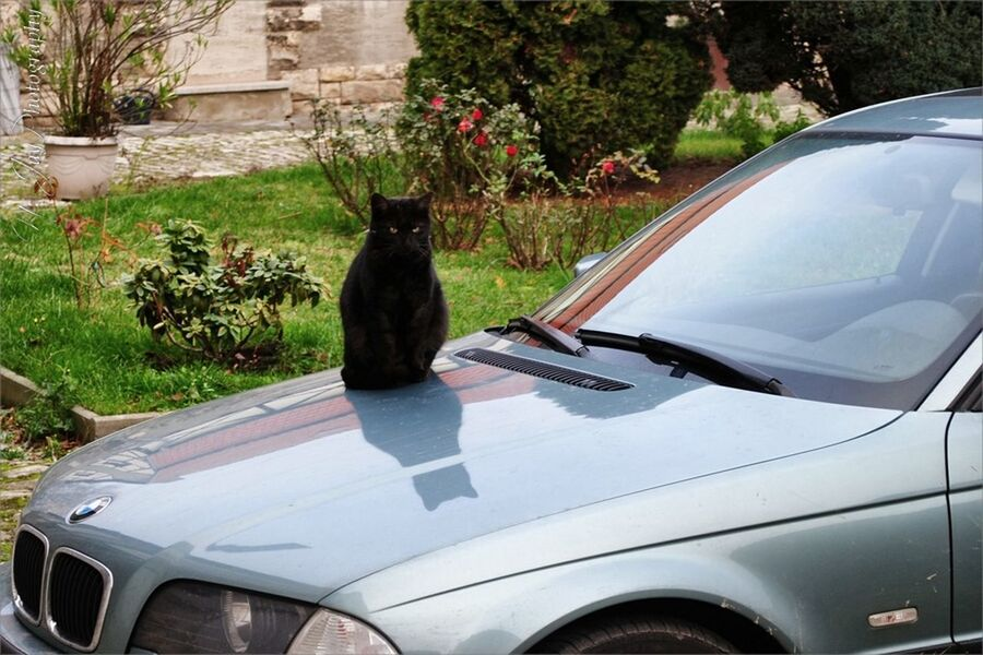 Fritz CDRE Cats Cat Cat Watching Pet Animals Warm Sitting Car Bmw Streamzoofamily Animal_collection Four Legs And A Tail Captured Moment Countryside Enjoying The View Germany Watching Technology Yard Nature_collection Pets Corner Black Cat Cute Reflection Parking
