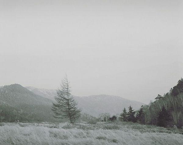 EyeEm Best Shots Blackandwhite Japan Photo Photography Mamiya RB67 120mm Filmcamera Film Nature