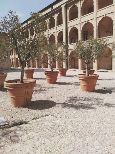 Oliviers Marseille La Charité Patrimony Summertime Architecture Olive Trees