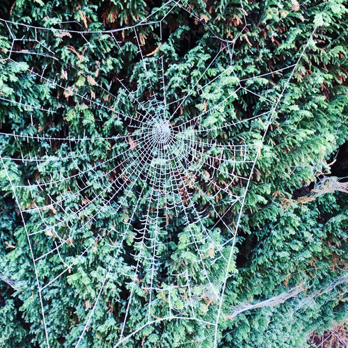 Close-up of spider web on plants in forest