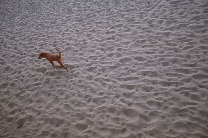 Animal Themes Dog Domestic Animals High Angle View Mammal Nature No People One Animal Outdoors Pets Sand