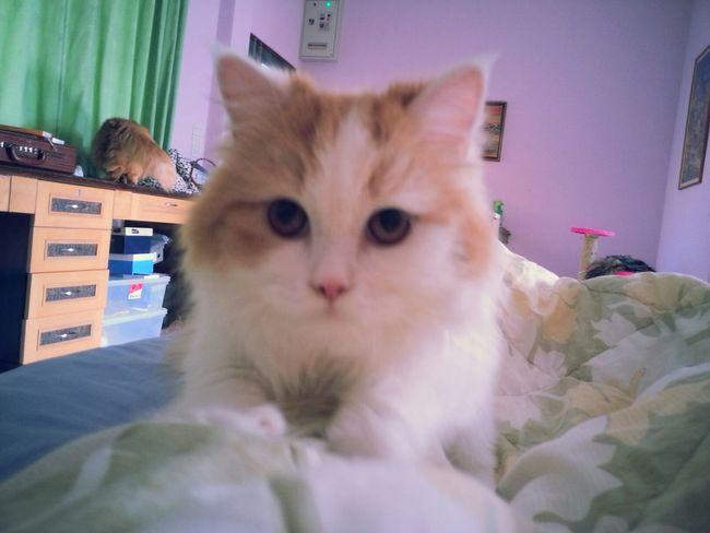 ♡ Cat Catcatcat Cute Pets Cats
