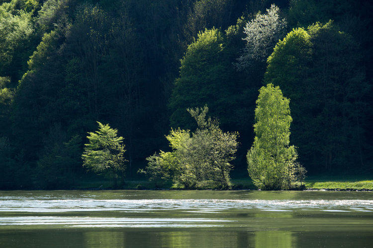 Donau Danube Frühling Wald Bäume Wasser Fluss Frisches Grün Frische