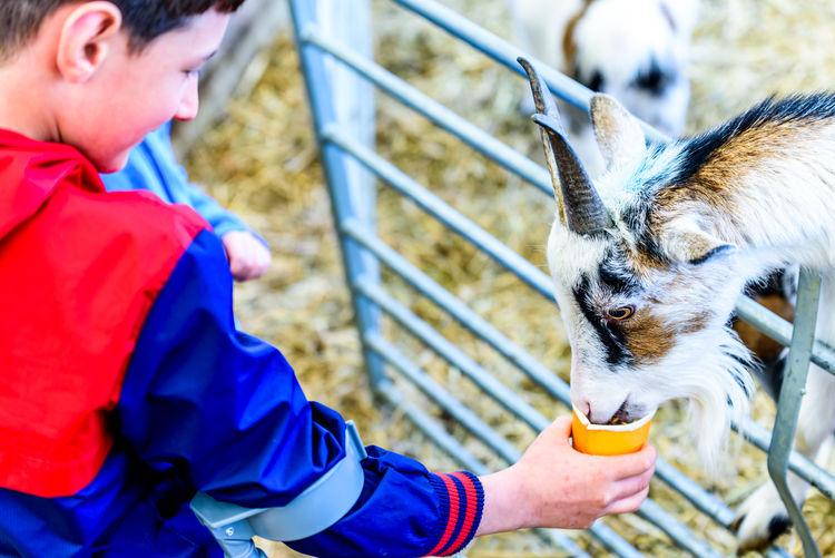 Boy feeding goat at farm
