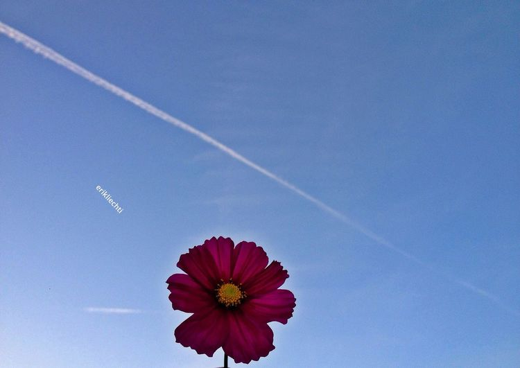 Skyporn Flowerporn TRENDING  Enjoying The Sun