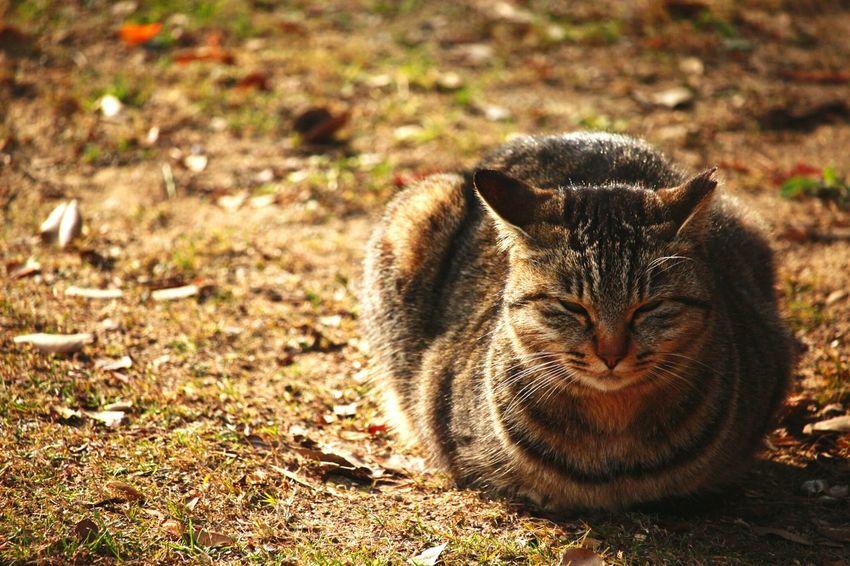 Cat ひなたぼっこ Cute Cats Animal Photography Sleeping Cat Taking Photos I Love Onomichi♪