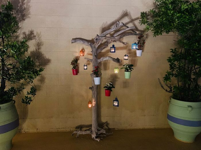Light Tree Tree