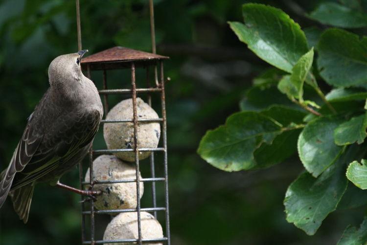 Vertebrate Bird