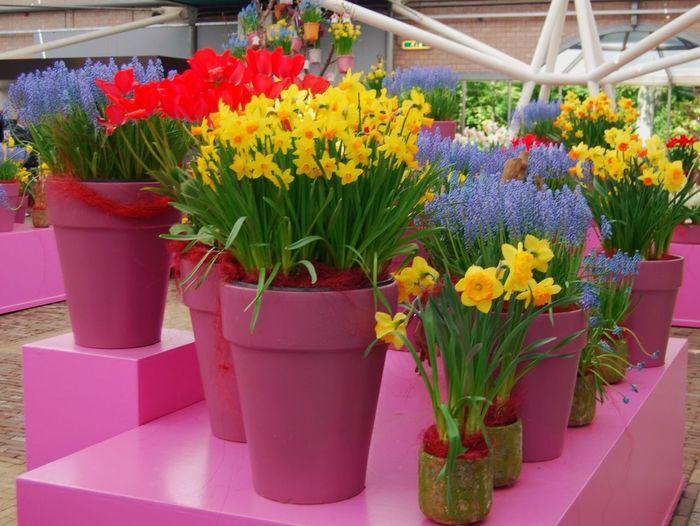 Secret Garden Potted Colour Colour Pot Plant Flowerporn Flowers Bright Taking Photos