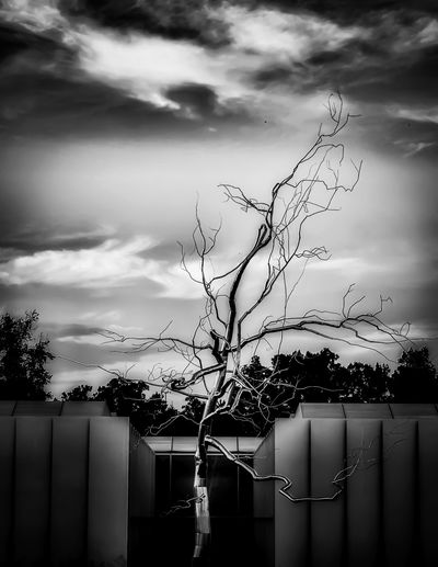 My favourite metal tree. 🤖 Architecture Art Is Everywhere Art Evening Blackandwhite Cloud - Sky Outdoors Built Structure Building Exterior Tree Nature Beauty In Nature Textures And Surfaces Branch Smooth Walking Around Taking Photos