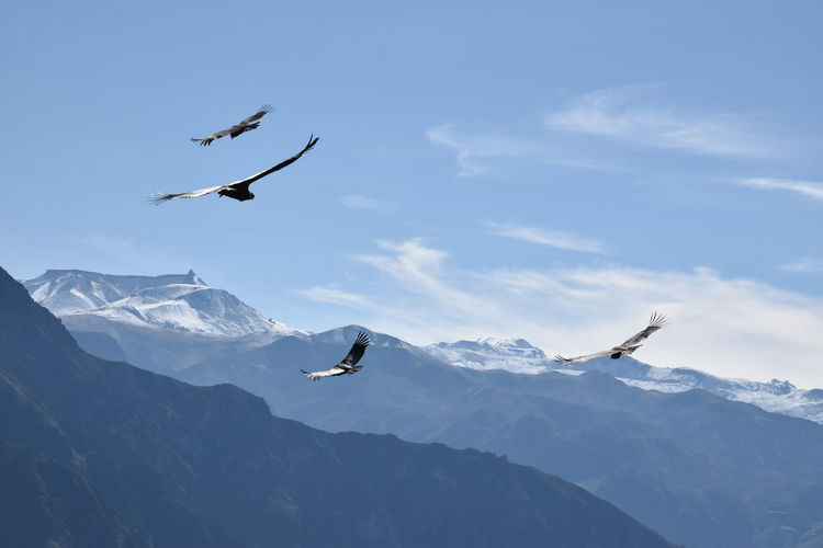 Low angle view of seagulls flying over mountain against sky