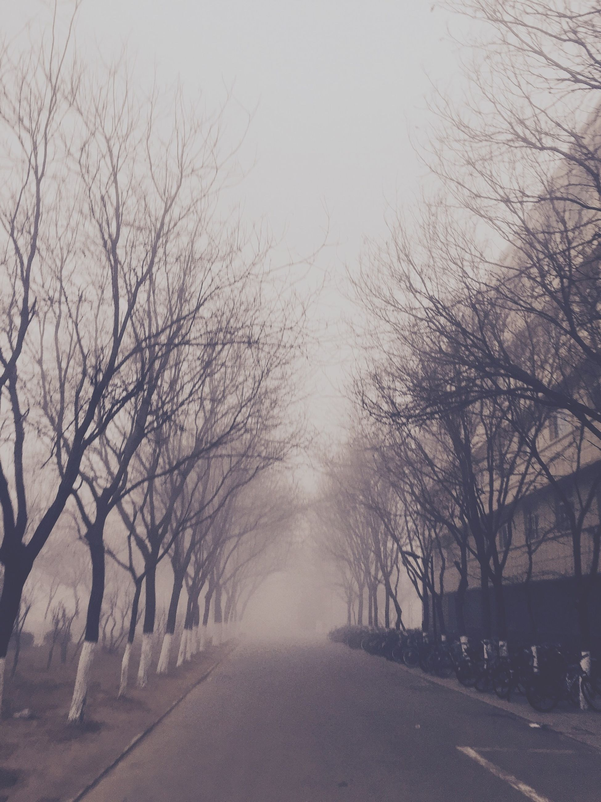 tree, the way forward, bare tree, diminishing perspective, road, transportation, vanishing point, fog, tranquility, branch, street, nature, sky, tranquil scene, treelined, foggy, outdoors, empty road, weather