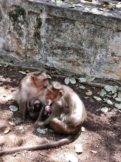 🐒 Monkey with his kids Monkey Kids EyeEmNewHere EyeEm Best Shots Eye4photography  Eyemphotography Light And Shadow Outdoor Photography Scenics Tranquility Travel Destinations Freshness Calm Monkey Two Monkeys Tranquil Scene Water Relaxation Ground Countryside Non-urban Scene Idyllic