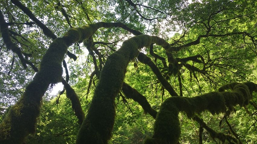 Shapes Beauty In Nature Branch Forest Green Color Nature No People Outdoors Tree Tree Trunk