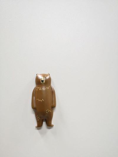 Bear Dall Lovely Brown White Background Studio Shot Close-up